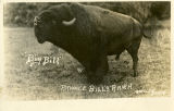 Big Bill, Pawnee Bill's Ranch, Pawnee, Okla.